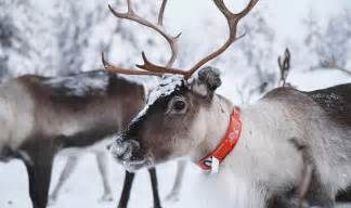 animal rights caigners protest reindeer christmas displays nature news express co uk