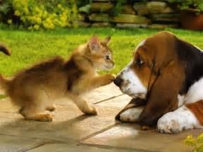 cat puppy kittens puppies teddybear64 wallpaper 16751422 fanpop