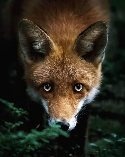 Forest Animals Finland Wild Animal Photographer Joachim