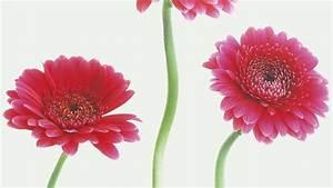 Blumen Bedeutung Hochzeit : blumen bilder elegant schne blumen blumen und pflanzen in ~ Articles-book.com Haus und Dekorationen