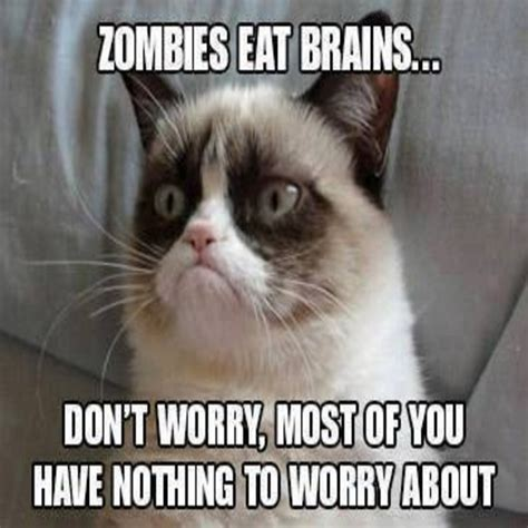 Crazy Cat Memes - silly cat memes 28 images funny cat meme lol jokes memes pictures 25 funny animal memes to