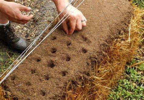 straw bale gardening fertilizer straw bale garden tips homesteading