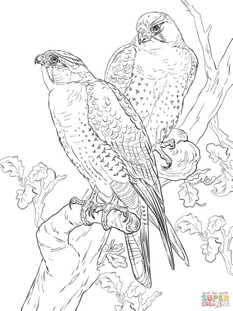falcon coloring pages    print