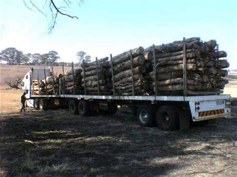 african eucalyptus wattle pine timberid product
