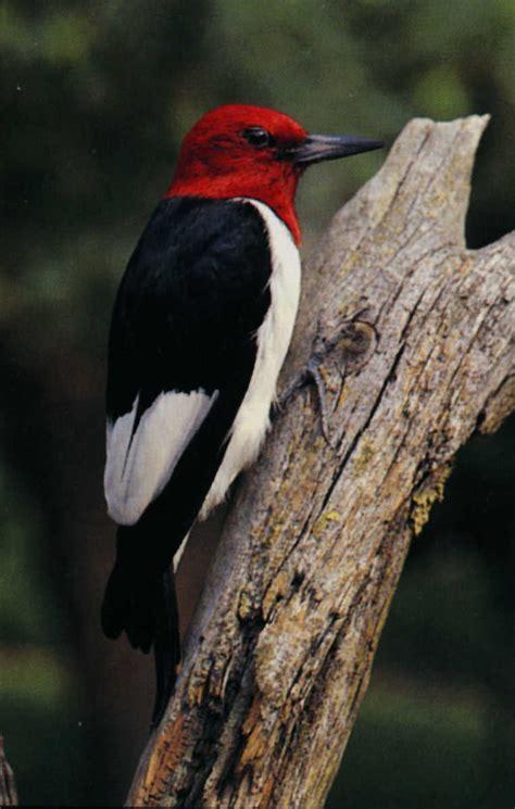 birds minnesota river basin data center