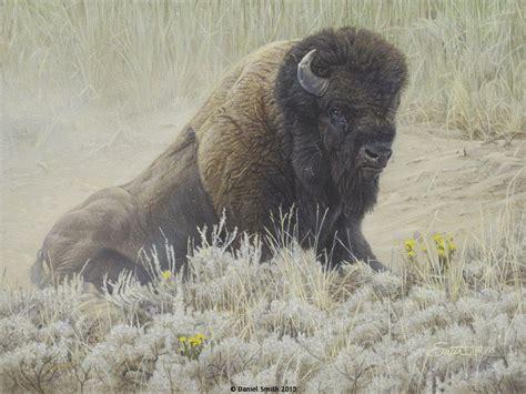 Dust Bowl   Daniel Smith Wildlife