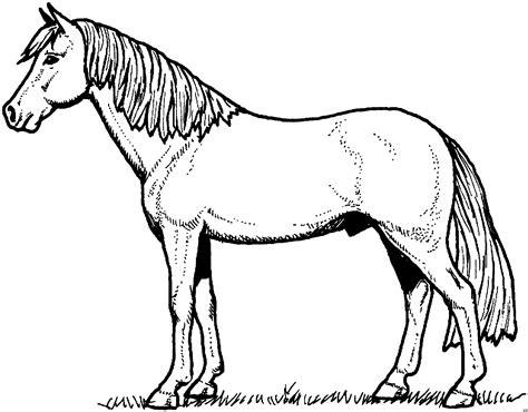 pferd mit schoenem schweif ausmalbild malvorlage tiere