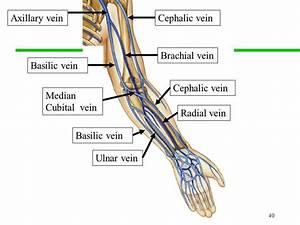 Pictures Of Brachial Veinhealthiack