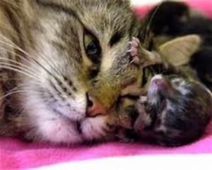 Welcher Junge Passt Zu Mir : welcher gef hrte von warrior cats passt zu mir ~ Heinz-duthel.com Haus und Dekorationen