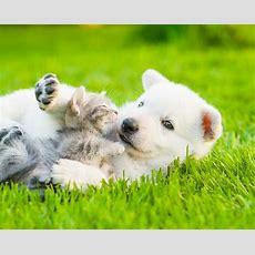 25 Hundebilder Süße, Lustige Und Schöne Bilder Von Hunden