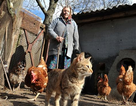 Animals Inherit Mixed Legacy At Chernobyl