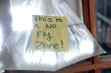 what is to keep flies away susiej the plastic bag of water really does keep flies away