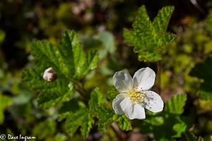 Cloudberry Bog Surprise