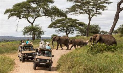 african safari jeep call of the wild from tanzania travel news travel