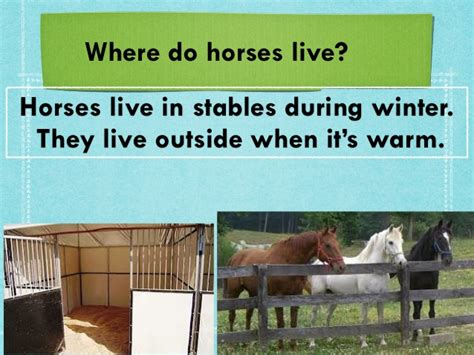 horses where annie they