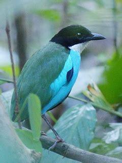 birdingasiacom expert guided birding tours info