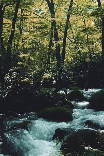 Gifs Forest Nature Vertical Water Landscape Animation