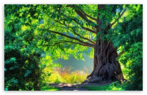 Beautiful Tree Phone Wallpaper by Beautiful Tree 4k Hd Desktop Wallpaper For 4k Ultra Hd Tv