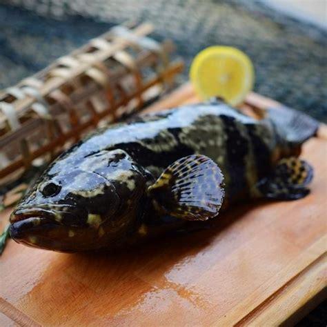 grouper tiger dragon ninja fish food singapore delivery fresh