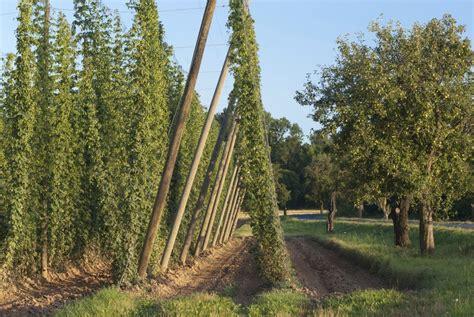 bureau de la m騁rologie resume forme eucalyptus planter et tailler ooreka houblon planter et cultiver ooreka noisetier planter et tailler ooreka resume 2018