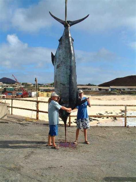 cowbell wahoo lure blowout fishing tuna deal