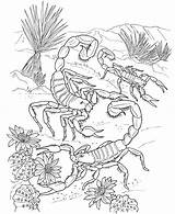 Scorpion Coloring Pages Printable sketch template