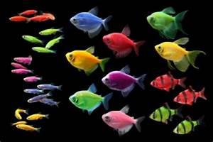 GloFish Display