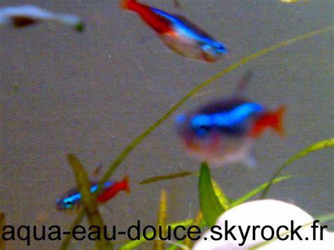 de aqua eau douce page 6 poissons d aquarium d eau douce skyrock
