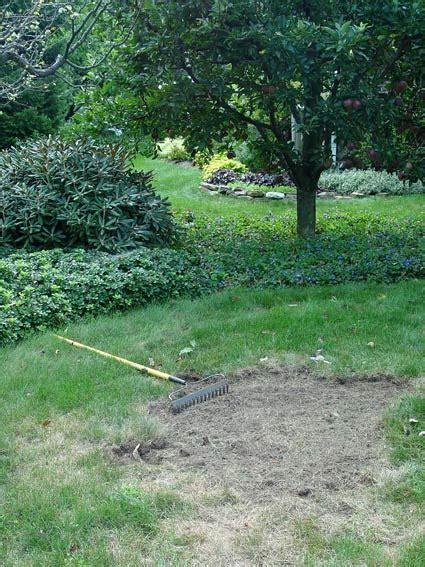 fix dead patches   lawn greenview fertilizer