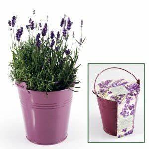 Lavendel Pflanzen Im Topf : die sch nsten pflanzen geschenke f r gr ne daumen ~ Frokenaadalensverden.com Haus und Dekorationen