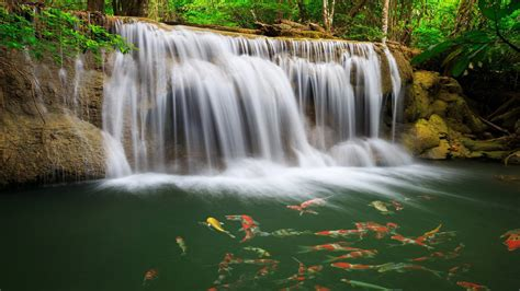 river waterfall coast colorful fish greens water tropical