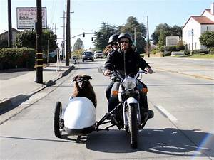Finally, a Documentary About Dogs Riding in Sidecars | WIRED