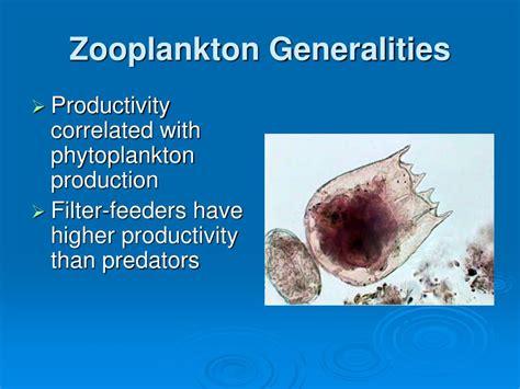 zooplankton powerpoint ppt macrophytes presentation generalities