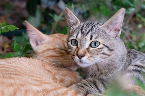 Feline Facts  Debunking 5 Common Myths Katzenworld