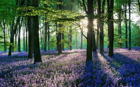 The Woods Wallpaper Live Woods Wallpapers Kyd Woods