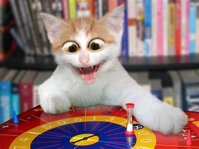 Cat Funny Desktop Wallpapers Computer Backgrounds