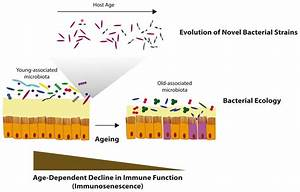 The role of the gut microbiome during host ageing ...