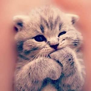 Funny + Cute An... Cute Animals