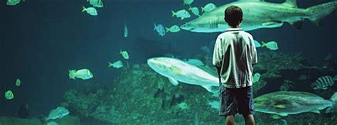 north carolina aquarium  roanoke island obx connection