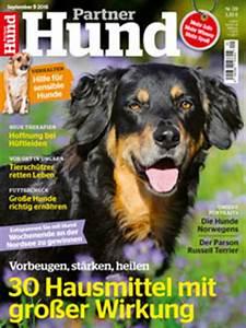 Partner Hund Abo Kündigen : katze holt sich beim nachbarn stofftier zum spielen ~ Lizthompson.info Haus und Dekorationen