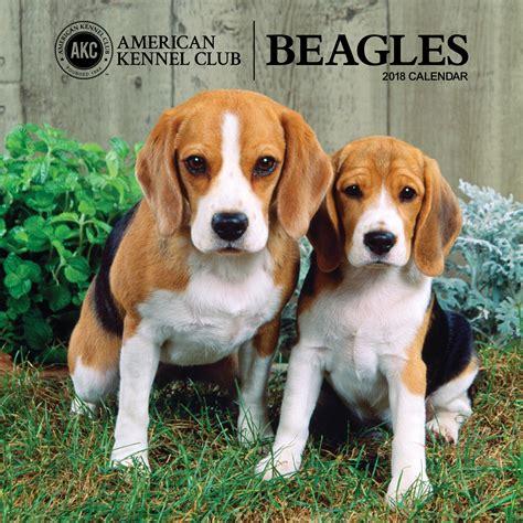 beagles zebrapublishing