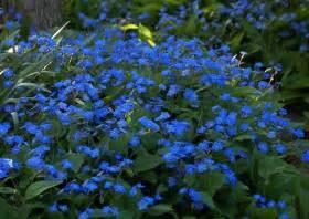 Schattenpflanzen Garten Winterhart : schattenpflanzen ~ Sanjose-hotels-ca.com Haus und Dekorationen