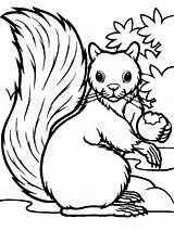 Squirrel Coloring Eating Pages Printable Hungry Squirrels Acorn Getcolorings Colornimbus sketch template