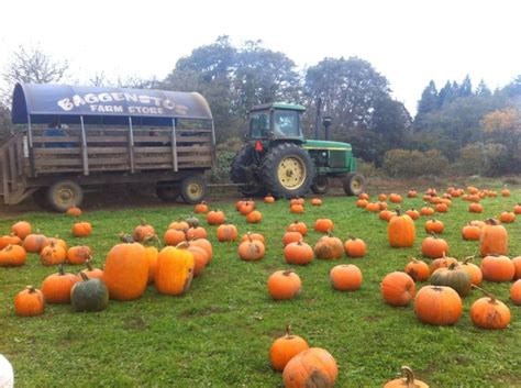 bend oregon preschools pumpkin patch bend oregon free programs blogsarchi 492