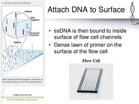 Illumina Flow Cell Illumina Sequencing