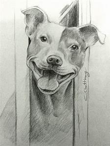 Pitbull Dog Drawing In Pencil