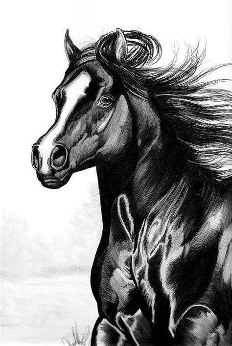 shading   horse  bic  drawing  cheryl poland