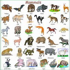 Alibaba  Visual Dictionary  English Vocabulary, Learn English, English Language Learning