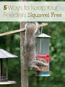 Keep Bird Feeder - WoodWorking Projects & Plans