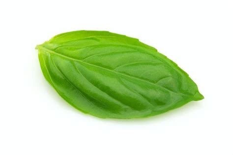 basil leaves pics common health problems you can solve using basil